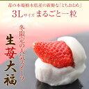 いちご大福【送料無料】<生苺大福 6個入×2箱セット>つぶあん [お菓子 和菓子 イチゴ