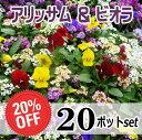 アリッサム&ビオラ苗・おまかせ20ポットセット(特売20%off)