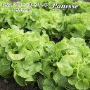 レタス Panisse 9cmポット苗 グリーンオークリーフ 【輸入種】 【ラッキーシール対応】