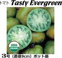 楽天なえ屋エアルームトマト苗 Tasty Evergreen (オーガニック種子)