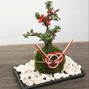 苔玉 リングピロー 誓いの儀式を和の雰囲気で 苔玉のリングピロー「紅長寿梅」 水引 苔玉 器 敷石のセット 挙式 指輪交換 縁起良い