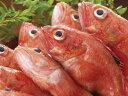 【鮮魚】キンキ1匹、200g~500g前後
