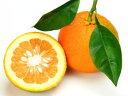 葉付橙〈ダイダイ〉1個、150g〜200g前後