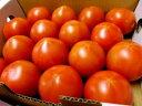 フルーツトマトアメーラトマト1ケース、9