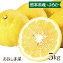春みかん 柑橘 はるか 5kg 送料無料 農家直送 産地直送 サラダみかん フルーツ 果物 大嶌屋(おおしまや)【gift】