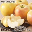 フルーツ 果物 青森 トキ りんご 4.5kg 大小混合 送料無料 <10月上旬より順次出荷> 国産 トキ 黄色 青りんご 大嶌屋(おおしまや)