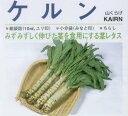 【レタス】 サカタ ケルン 山くらげ [春まき野菜のタネ]