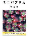 【世界の果菜】 ミニパプリカ チョコ