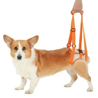 【ペティオ】老犬介護用 歩行補助ハーネス 後足用K L