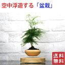 【送料無料】【浮く 盆栽】エアー盆栽 植木鉢 プランター エアーボンサイ 【木彫デザイン】LED搭載