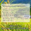 岩手県三陸産サラダこんぶ(すき昆布)500g 送料無料