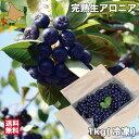 北海道 アロニア 冷凍 果実 1kg