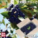 北海道 アロニア 冷凍 果実 2kg