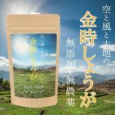 金時しょうが 粉末 100g 送料無料!国産の金時しょうがの種を無農薬栽培し、粉末加工しております。冷え性に効果的!純粋な金時ショウガの粉末のみを使用!