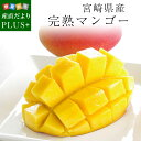 送料無料 宮崎県産 完熟マンゴー 3Lサイズ 460g以上×1玉 まんごー 夏ギフト2019 お中元ギフト