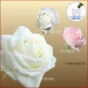 バラの花束 白色系 50cm×1本※20本以上 トゲ取り無料