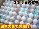 日常の食材 卵を大量でお届け 鶏卵 Mサイズ 1箱20パック入