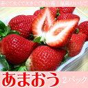 毎年人気の品種!赤くて丸くて大きくて旨い苺!福岡のいちご【あまおう】2パック入