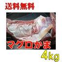 送料無料 大きさ規格外 特大マグロカマ 4kg【まぐろの貴重品】