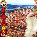 えび 車海老 特大【2L】活車えび 1.5kg(36-42尾)車エビ 生 クルマエビの本場 熊本県天草 養殖場直送 生き 活き車海老 獲れたて新鮮 おすすめ人気通販 産直 高級ギフト【送料無料】
