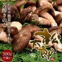 松太郎 きのこ 松茸×椎茸菌 ...