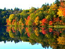 【楽天VIDEO 会員は無料】 紅葉もみじ ?湖畔?