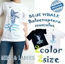メンズ&レディースTシャツ BLUE WHALE 星月を泳ぐ青いクジラ SUNNY SIDEオリジナル ホワイト ブラック スター ホエール SUNNY SIDE原宿竹下通り店店頭商品 Mサイズ&Lサイズ