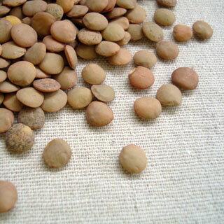 【送料無料】【メール便】アメリカ産 レンズ豆【500g】