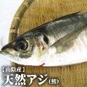 【スピード出荷】鳥取県産 天然アジ[生] 1匹(200g程度)【お刺身用♪】