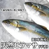 送料無料【スピード出荷】天然ヒラマサ[生] 1匹(2kg前後)日本海産【お刺身用】