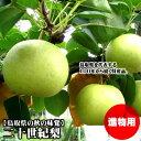 【早期予約】二十世紀梨[進物用] 5kgセット(L /18玉入)【送料無料】【鳥取県産】(20世紀梨)
