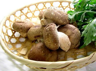 Shiitake (produce no bamboo ) * bacterium floor cultivation approximately 100 g (vegetable)