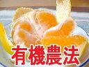 【★10/3以降発送】【香川県産】有機栽培 極早生みかん 1kg自然農法(有機JAS認定)※常温配送