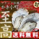 【送料無料】かき小町(特大殻付きかき)30個入り(加熱用)【数量限定】【RCP】