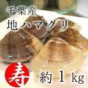 [鯛の塩焼き同梱用]高級地ハマグリ(千葉産)1kg(8-10個) 蛤 お吸い物用 築地直送 【地ハマ1K】