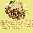 【送料無料】【国産天然】はちみつ 新潟県 抗菌 体内調整機能高橋さんが採集する蜂蜜(クリ) 220グラム