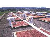 冲绳岛[删除]※手工使用自然太阳每公斤传统盐干赤穗梅干[【】天日干し 赤穂の天然塩 使用 手作りの伝統梅干し 1キログラム]