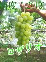 【送料無料】ロザリオ 大人気新品種は冬越し管理した美味しい葡萄です。ぶどうの匠が作るブドウは糖度、酸味、旨みの極上の逸品です。2房セット【楽ギフ_のし宛書】