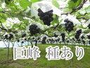 【送料無料】巨峰種有り 大人気新品種は冬越し管理した美味しい葡萄です。ぶどうの匠が作るブドウは糖度、酸味、旨みの極上の逸品です。2キログラム【楽ギフ_のし宛書】