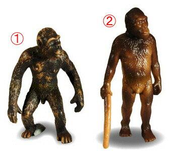 左:ドリオピテクス右:アウストラロピテクス
