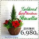 寄せ植え ミックス ゴールドクレスト 造花 生花そっくり フェイクグリーン 置き型 アレンジメント 寄せ植え ディスプレイ 大量注文可能 領収書発行 贈り物 送料無料 クリスマス 装飾 植物 代引き可 ツリー クリスマス