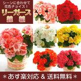 6色から選べるリーガース鉢植え【あす楽対応】花鉢 花鉢 フラワー ギフト 花 誕生日 女性 プレゼント 各種お祝いに 送料込