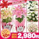 ◆今だけポイント10倍◆母の日ギフト 選べる母の日花鉢 百合 マザーズピンク シュガーラ