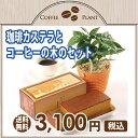 【送料無料】コーヒーの木と珈琲カステラのセット 観葉植物 鉢植え 【楽ギフ_メッセ】【RCP】