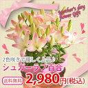 母の日 2016 花 ギフト 百合 シュガーラブ 送料無料 母の日ギフト プレゼント 鉢植え 鉢花