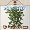 鉢植えの果実のイメージ