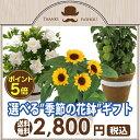 【ポイント5倍!】父の日 ギフト 選べる季節の花鉢5号鉢 鉢...