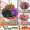 春咲きの鉢花のイメージ