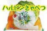 【浅漬け・キャベツ・漬物】産地のハルピンキャベツ半割