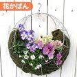 【花かばんセット】[FMP02-35Gかばん]丸型 ハンギング バスケット